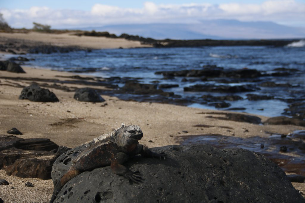 Galapagos beaches are full of fantastic wildlife