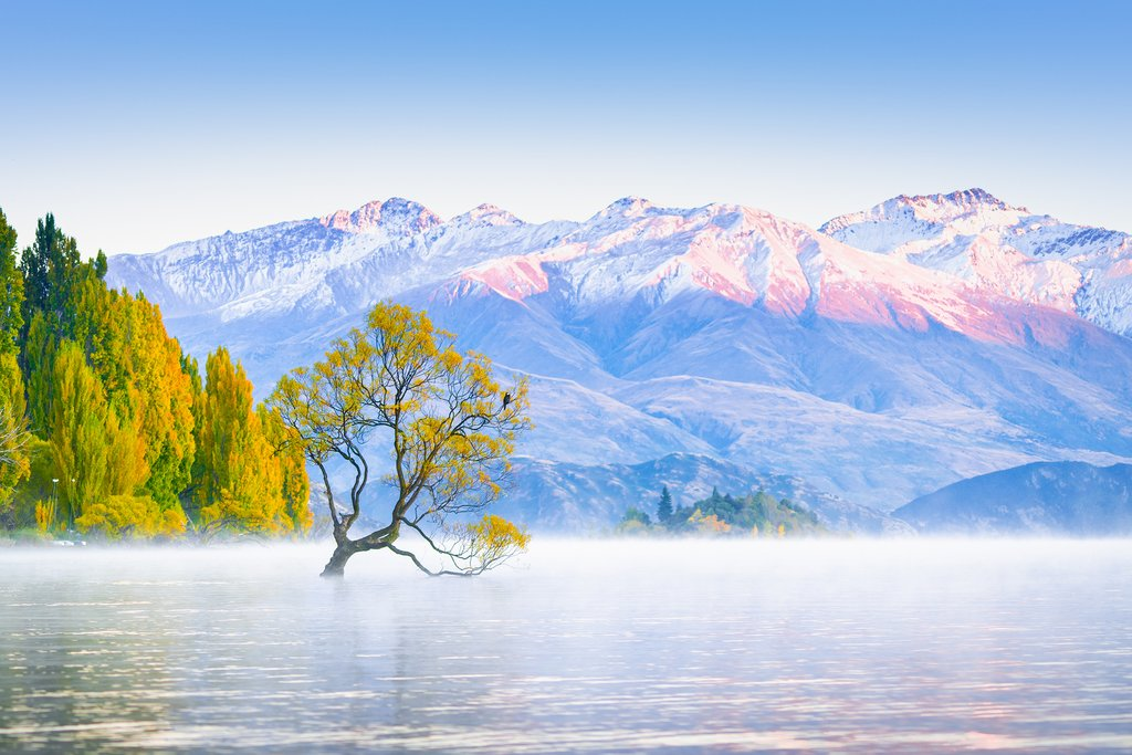 Reflection Tree at Lake Wanaka