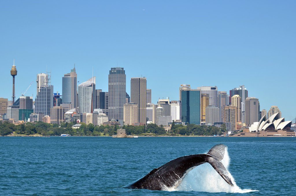 Australia - Sydney - Humpback whale against Sydney backdrop