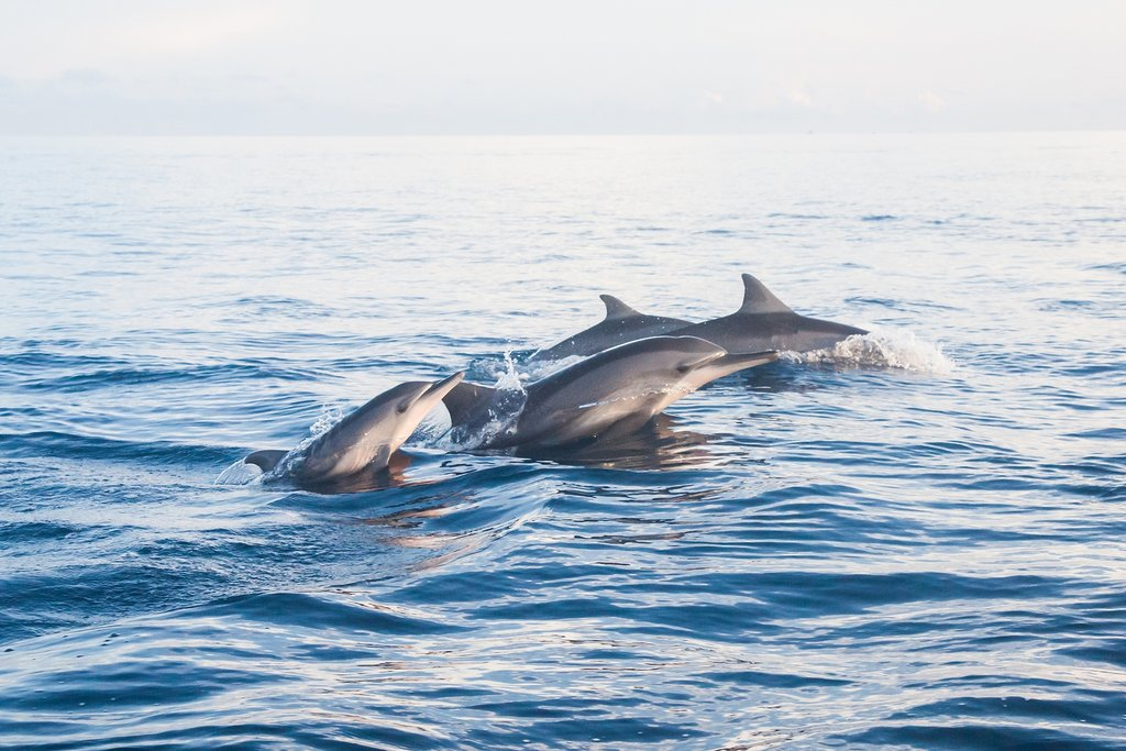 Do some dolphin spotting in a marine reserve