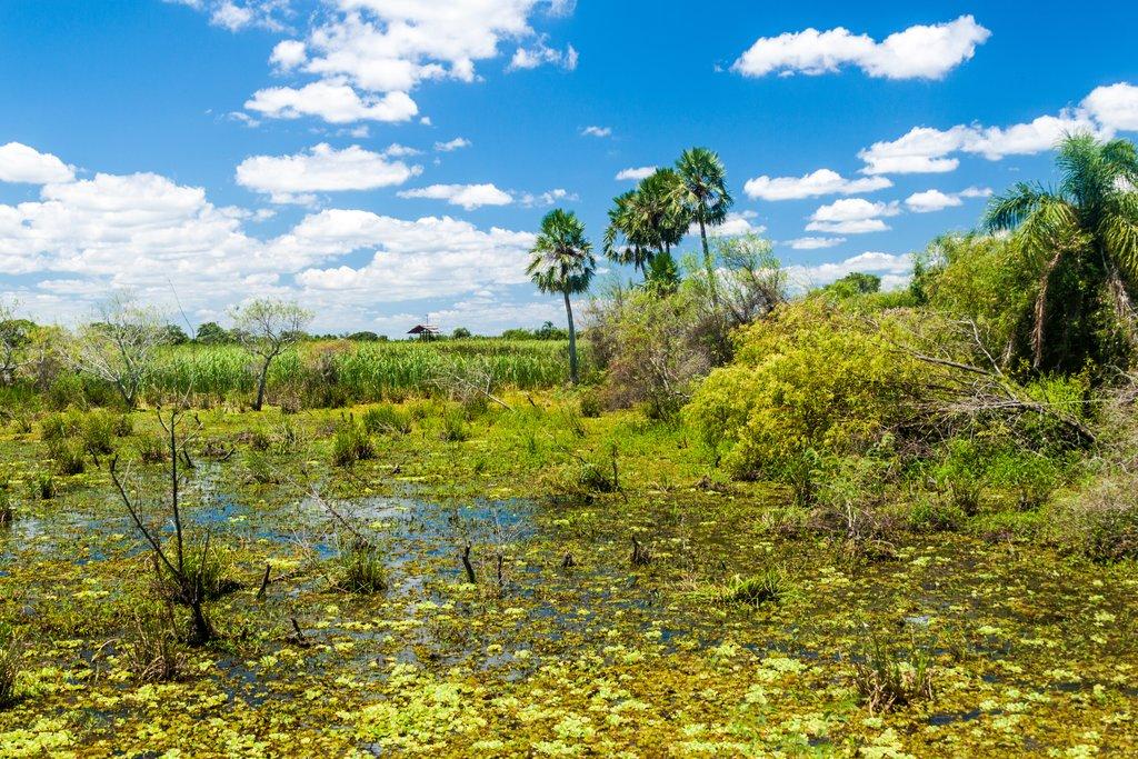 Iberá Wetlands
