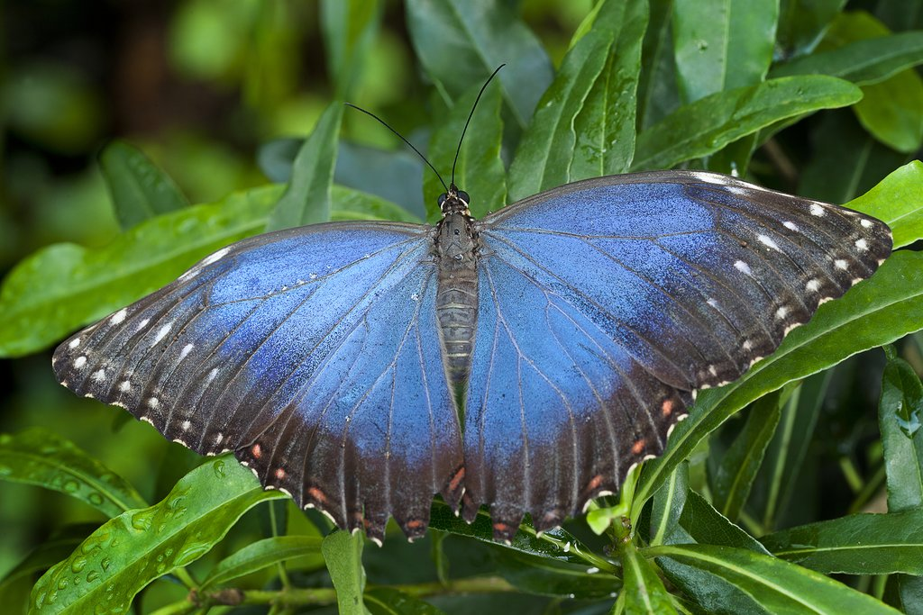 Learn about the butterfly life cycle at Pierella Garden