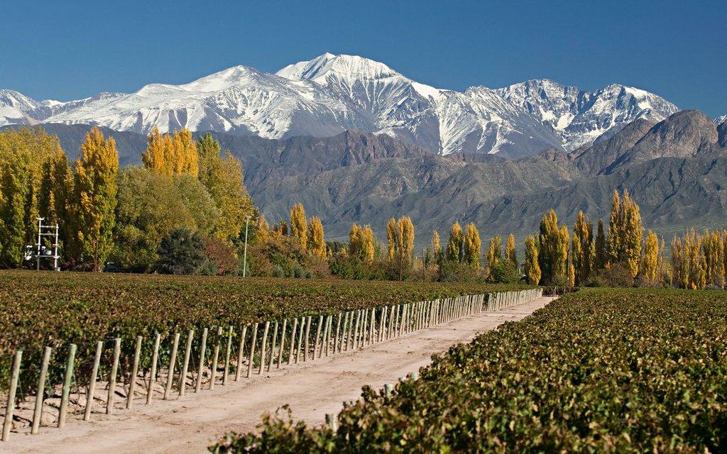 Discover Mendoza's vineyards