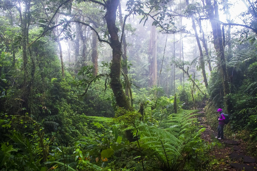 Explore the lush jungle of the Monteverde Cloud Forest