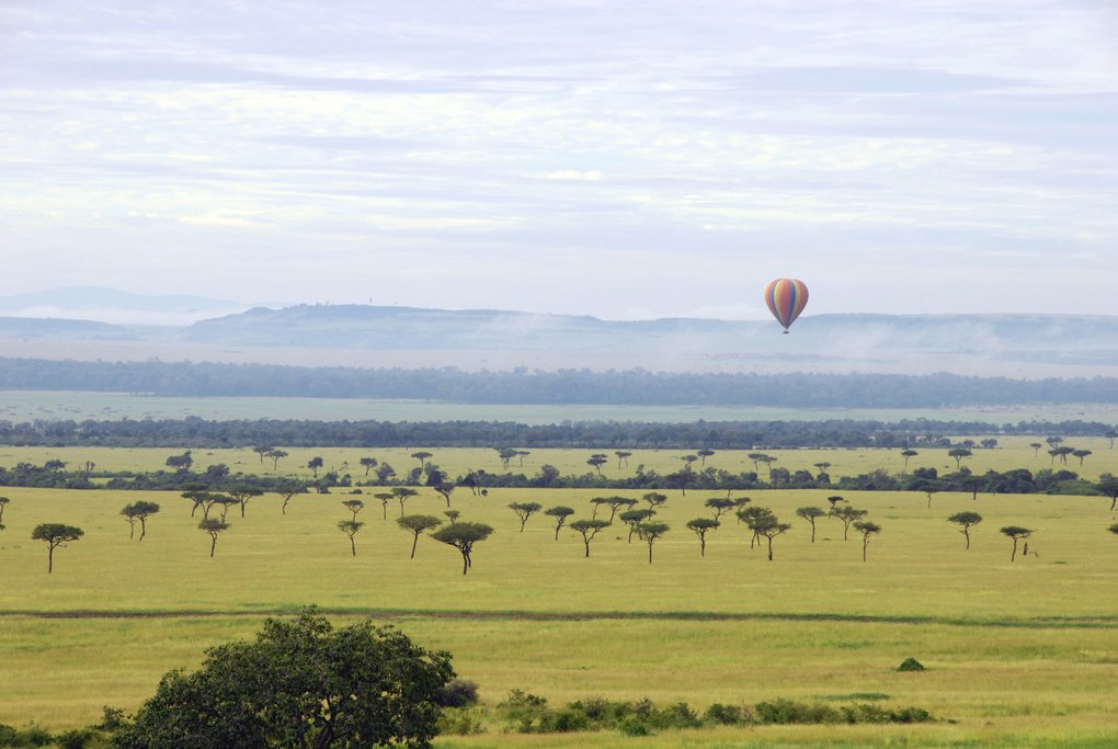 Hot Air Balloon Over the Savanna