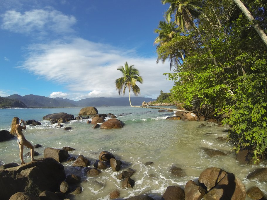 The Broken Coconut Tree of Ilha Grande