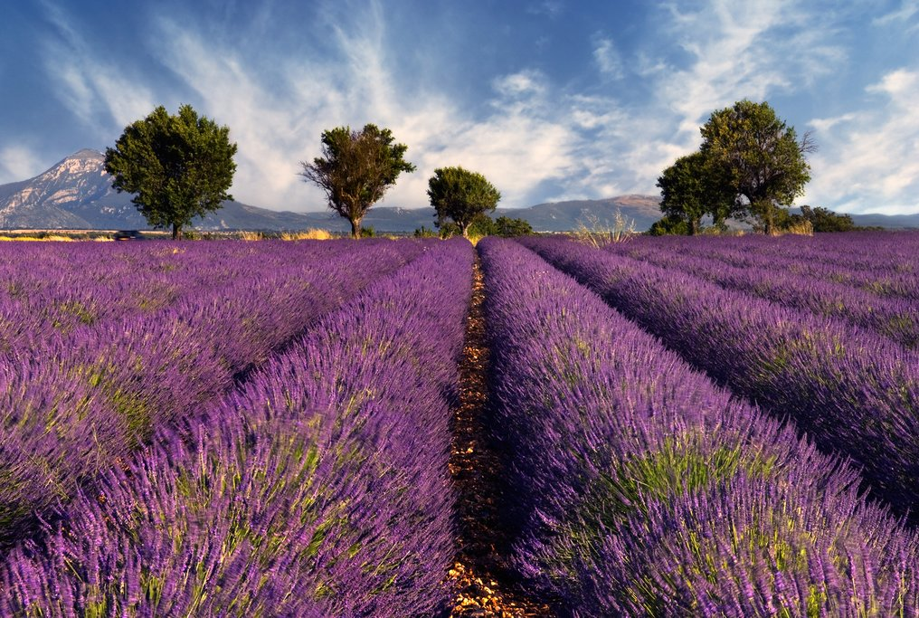 Say goodbye to Provence