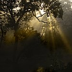 Sunlight through the trees in a sal forest, Bardia National Park