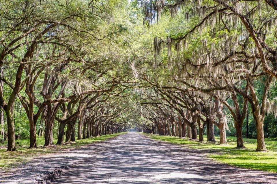 Wormsloe Historic Site, courtesy of Explore Savannah