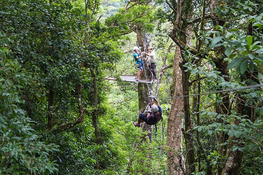 Ziplining through the rainforest canopy