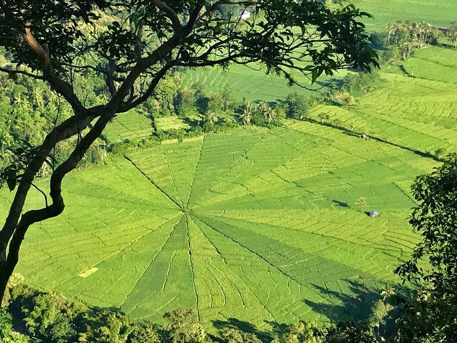 Spiderweb Ricefields