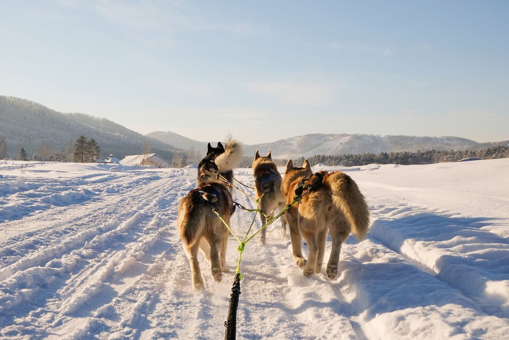 Dog sledding above the Arctic Circle