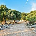 Olive Oil Tour Near Chania