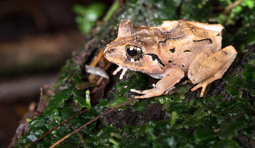 Explore the Sarapiqui Rainforest and its native species