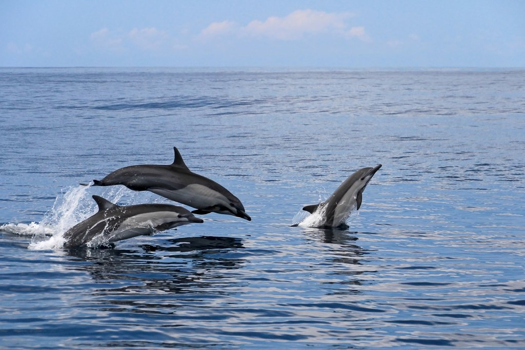 It's not uncommon to spot dolphins on this sailing tour