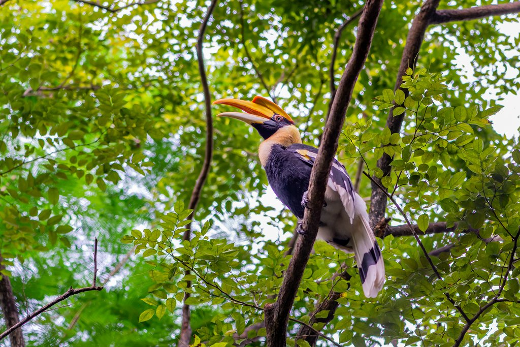 Go on a wildlife-spotting boat trip through the jungle