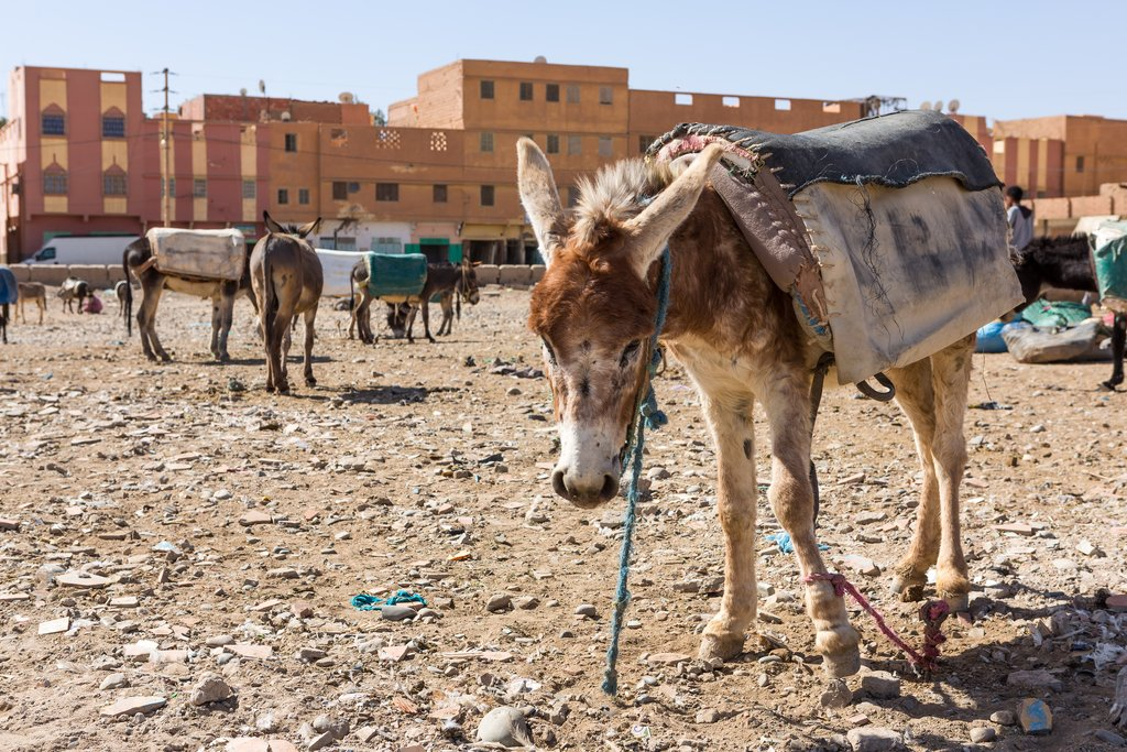 Donkey Parking Lot in Rissani, Morocco
