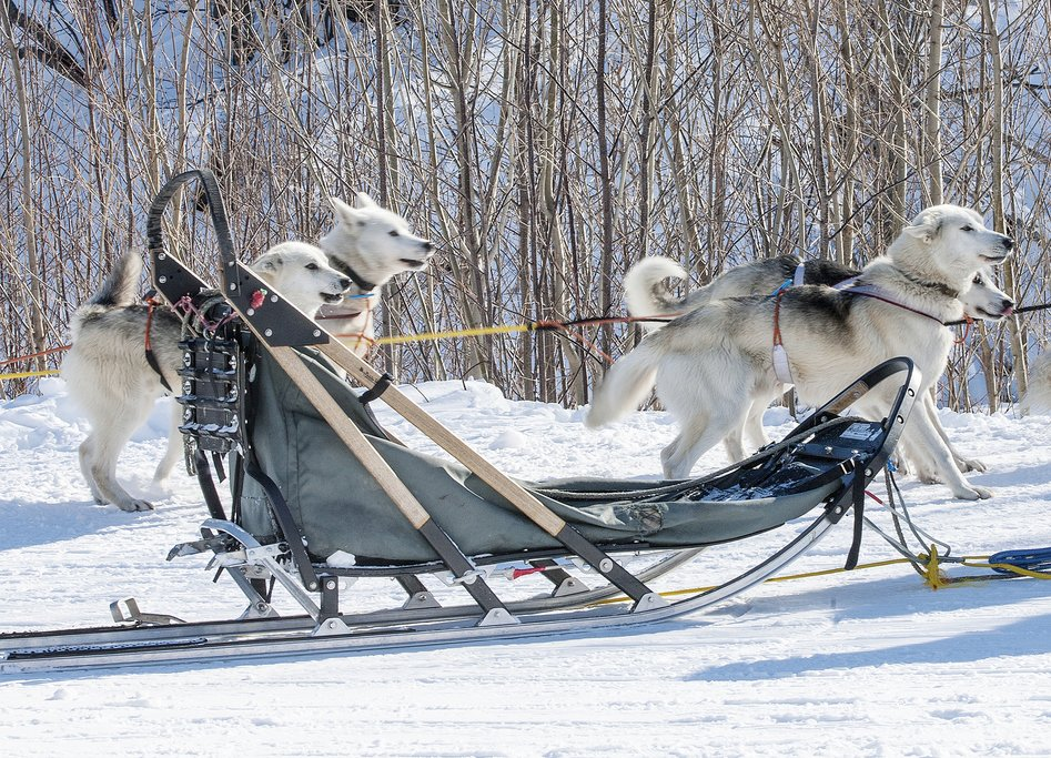 Dog sledding in Norway's Arctic