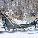 Dog sledding in Norway's Arctic
