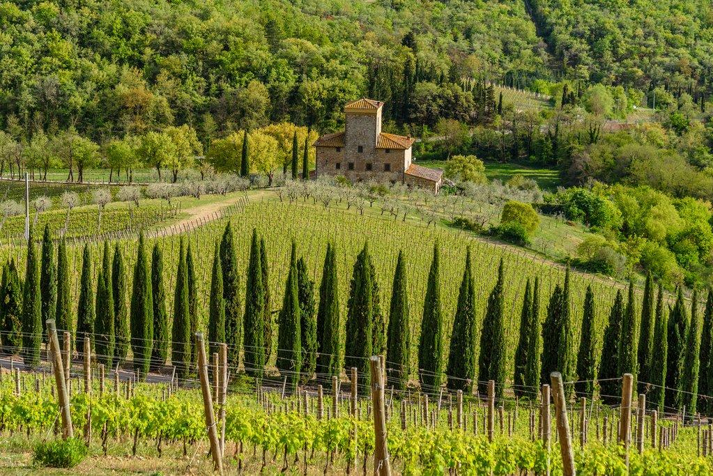 A historic villa and lush vineyard in the countryside of Radda-in-Chianti