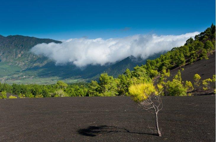 Lava landscapes in the island's interior