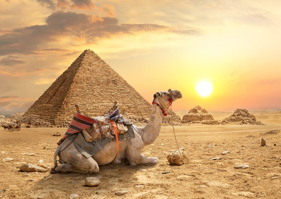 Camel resting by the pyramids