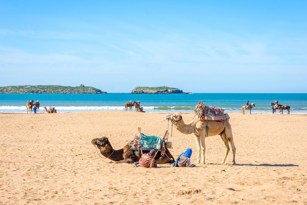 Camels and people on the sandy beach in Essaouira
