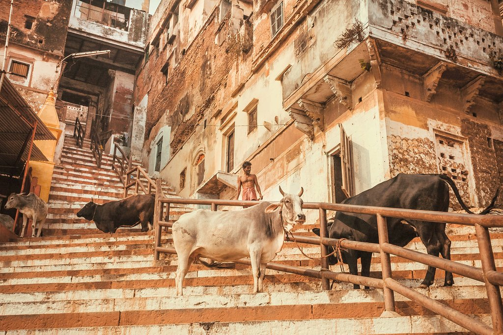 Explore the local side of Varanasi on a walking tour