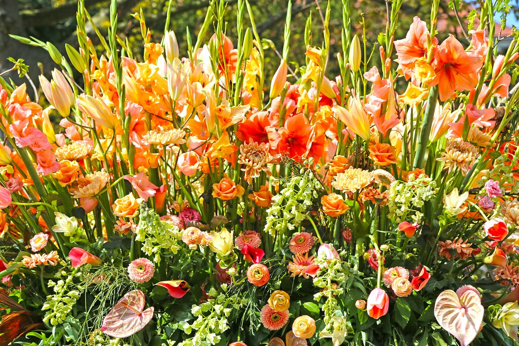 Colorful blooms in the flower bulb district
