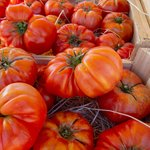 Organic tomatoes at a market in Nice