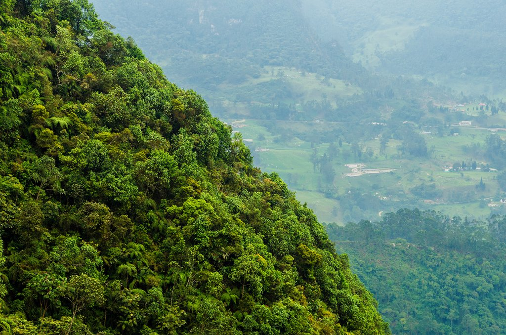 Lush Rainforests of Colombia