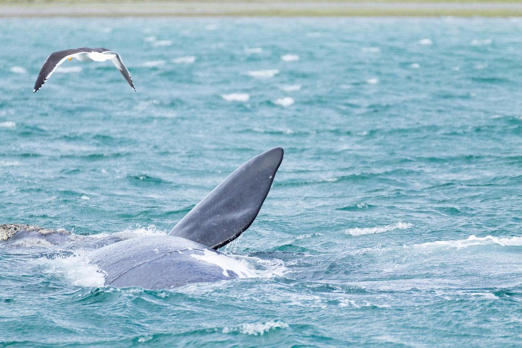Whales and Seabirds near Puerto Madryn