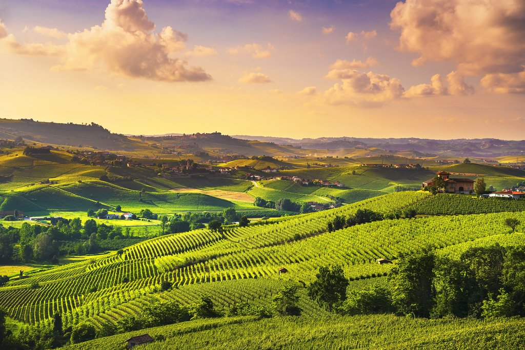 Sunset over the vineyards, Barolo