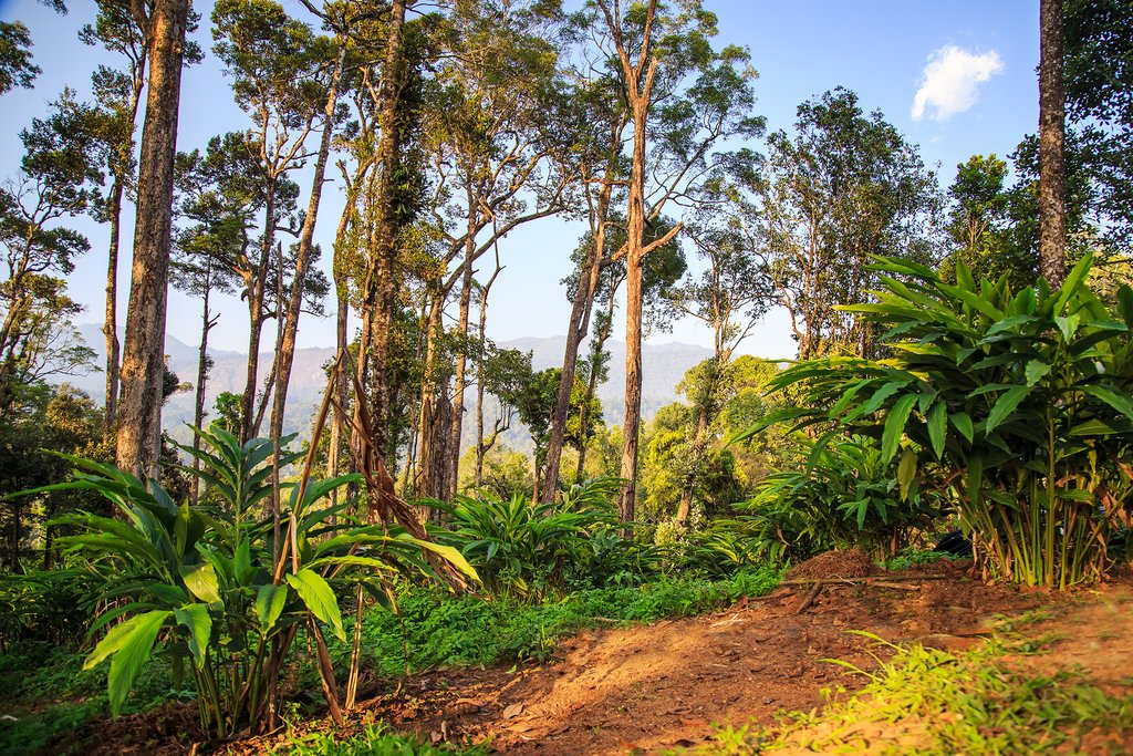 Get views of cardamom plantations