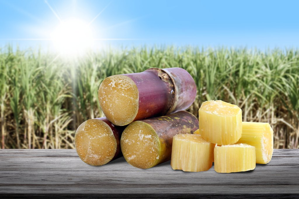 Today you'll process fresh sugarcane