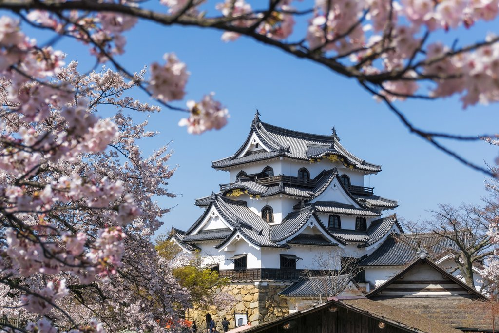 Hikone Castle in the Springtime