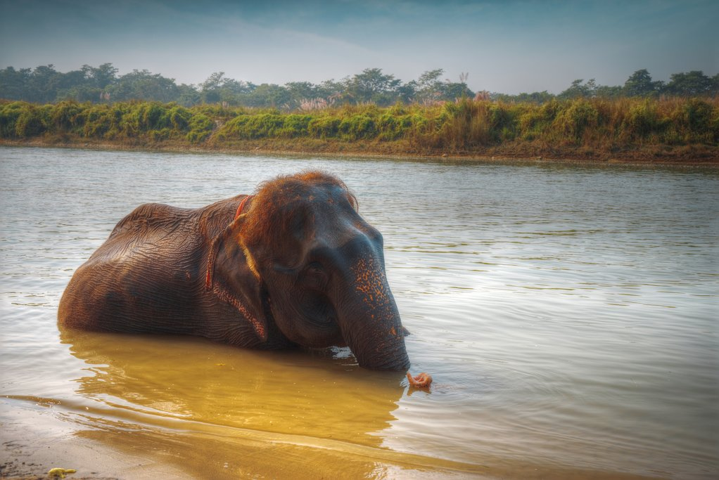 Bathe with elephants in Chitwan