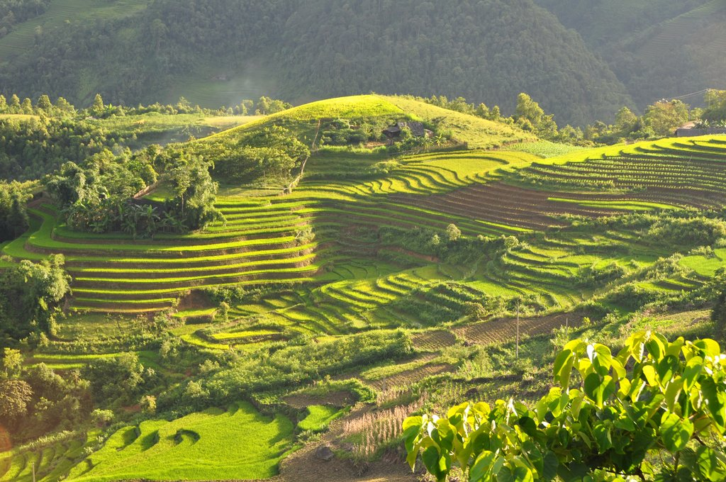 The terraced mountainsides of Sapa