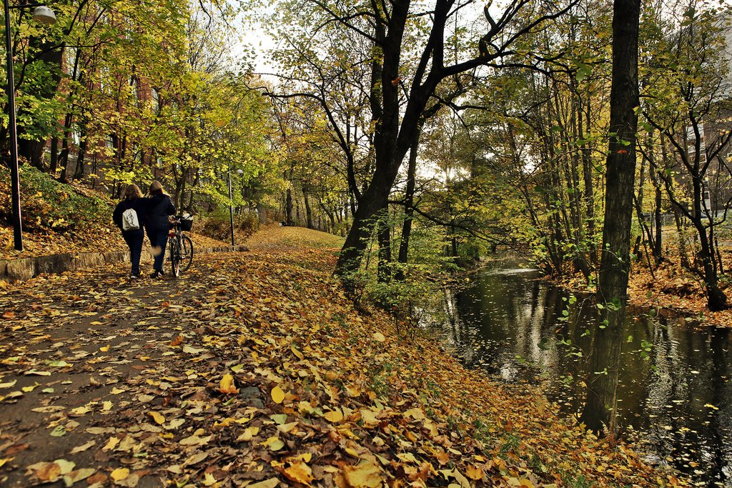 Autumn leaves along the Akerselva River