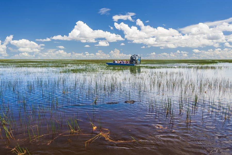 Take an airboat over the wetlands
