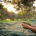 Georgios Tsichlis/Shutterstock.com