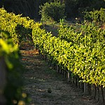 Sample local wines in the Konavle Valley