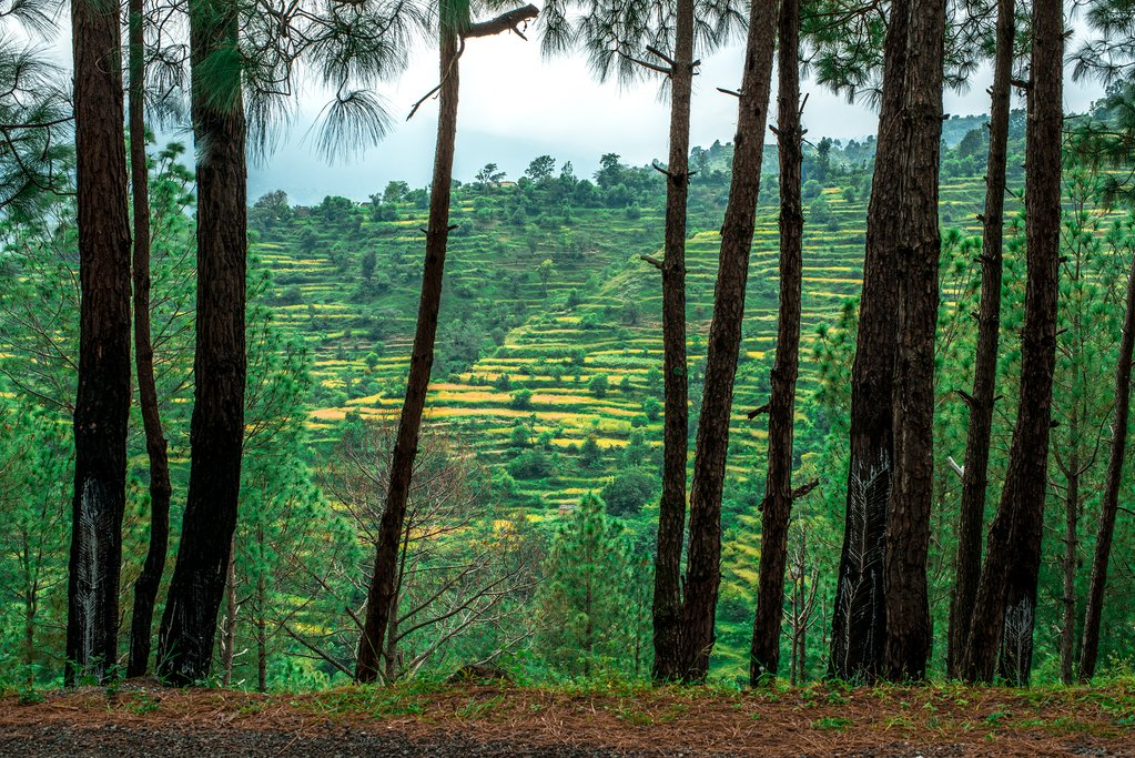Forests and rice fields