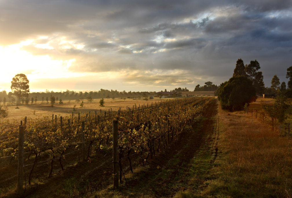 Hunter Valley at dawn