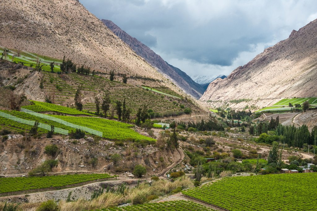 The quiet Valle del Elqui is Chile's pisco-producing capital