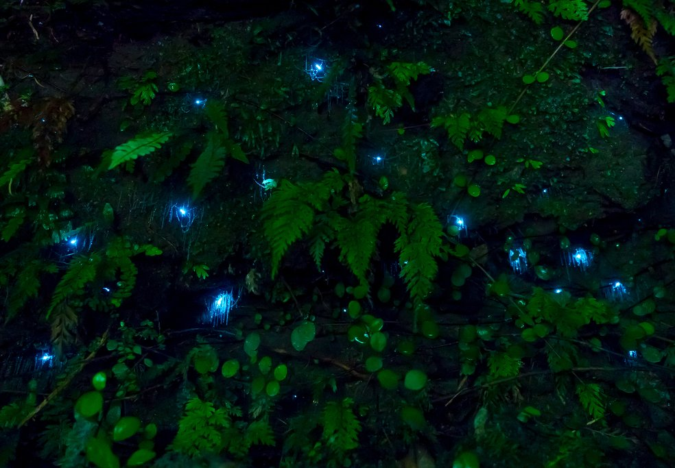 A glowworm cave in Waitomo