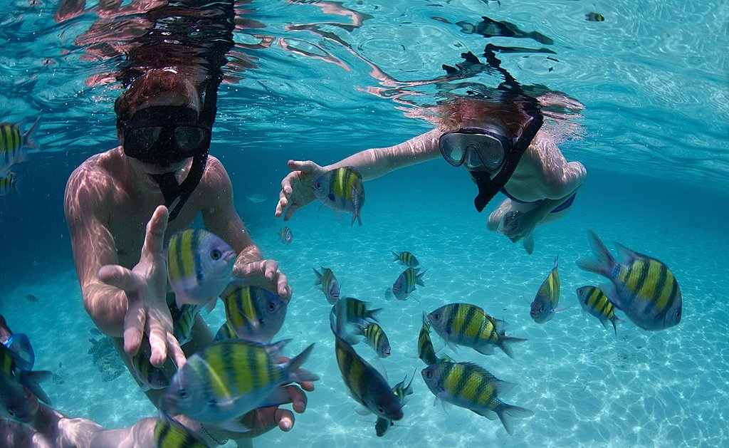 Snorkeling in the beautiful tropical sea