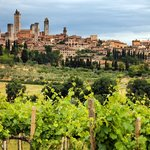 Vineyards near San Gimignano