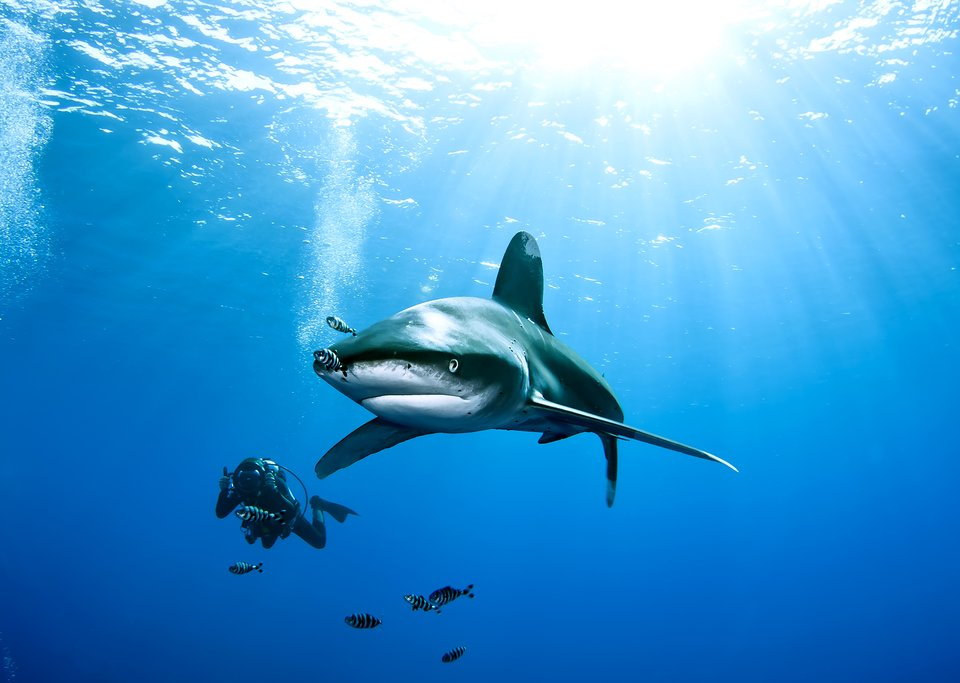 Go diving among white-tip reef sharks in Las Catalinas
