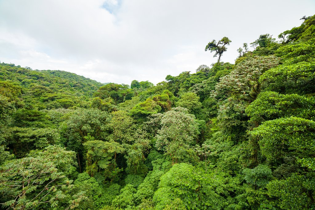 View over the treetops in Monteverde